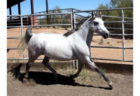 Arizona Outlawu00b4s Estrella M.R.