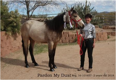 Pardon My Dust