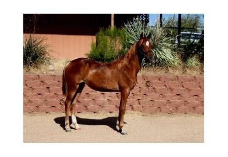 Arizona Outlawu00b4s Mercedes M.R.