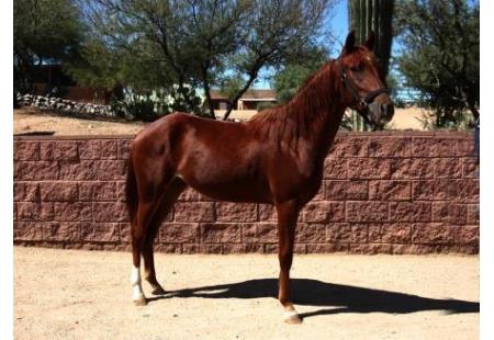 Arizona Outlawu00b4s Ferrari M.R.