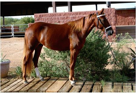 Arizona Outlawu00b4s Mimi M.R.